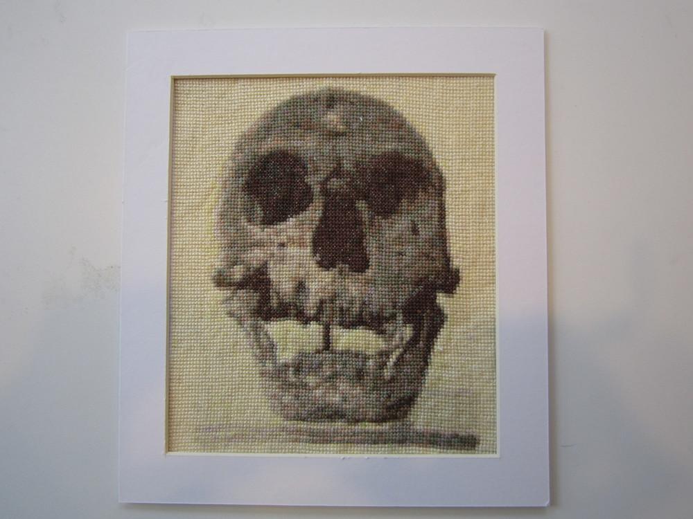 Neanderthal Skull 1.JPG