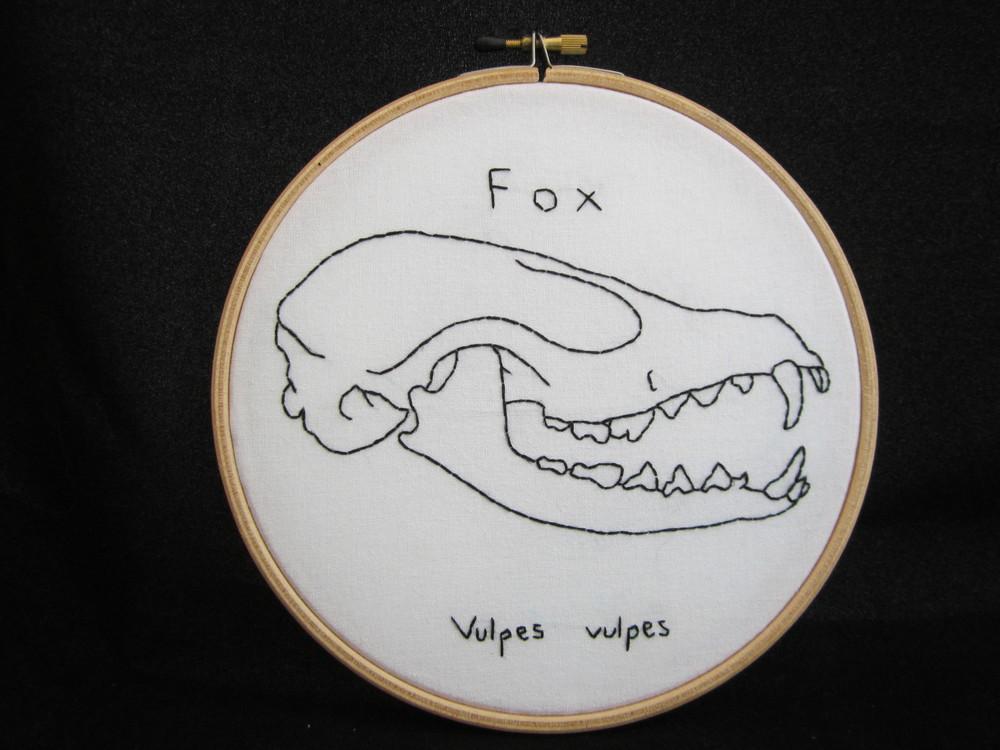 Fox Skull 2.JPG
