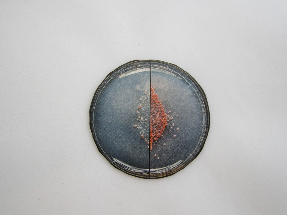 2nd Small Petri Dish Magnet 1.JPG