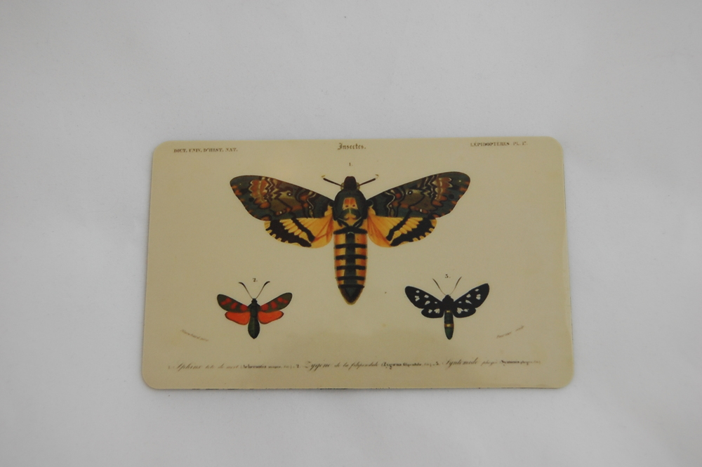 Death's Head Moth Magnet 2.JPG