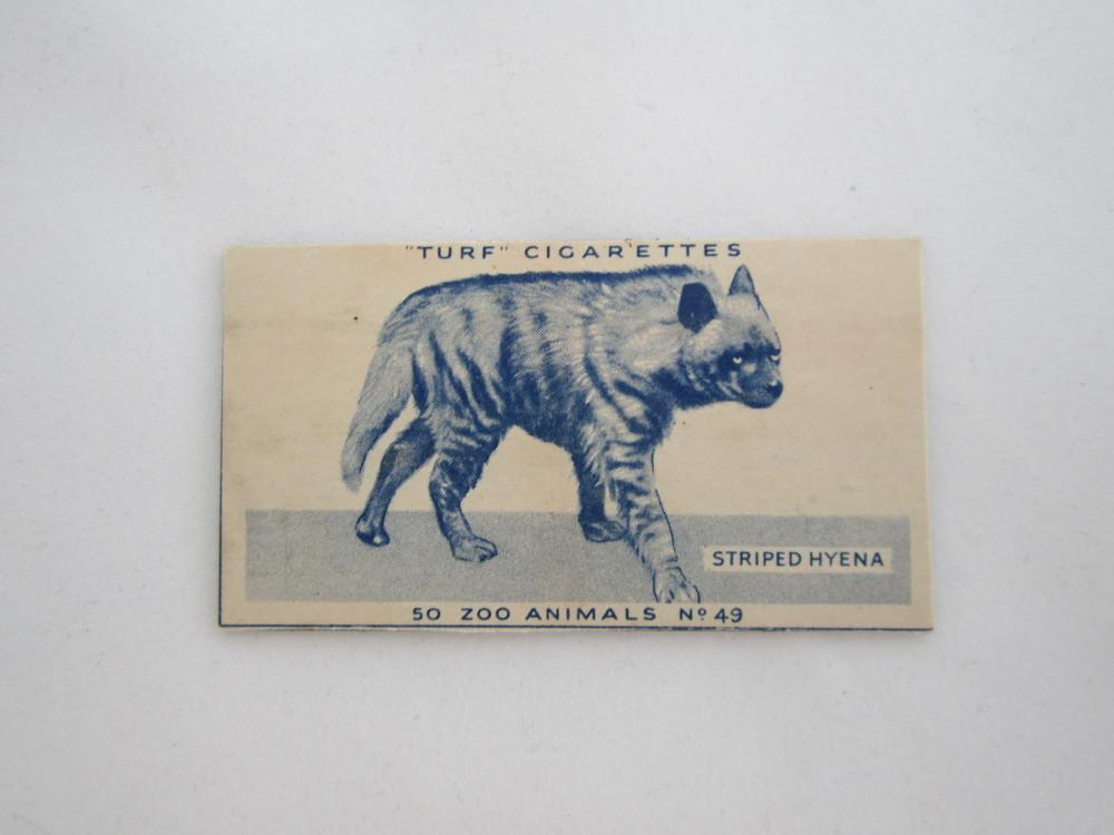 Hyena Cigarette Magnet.JPG