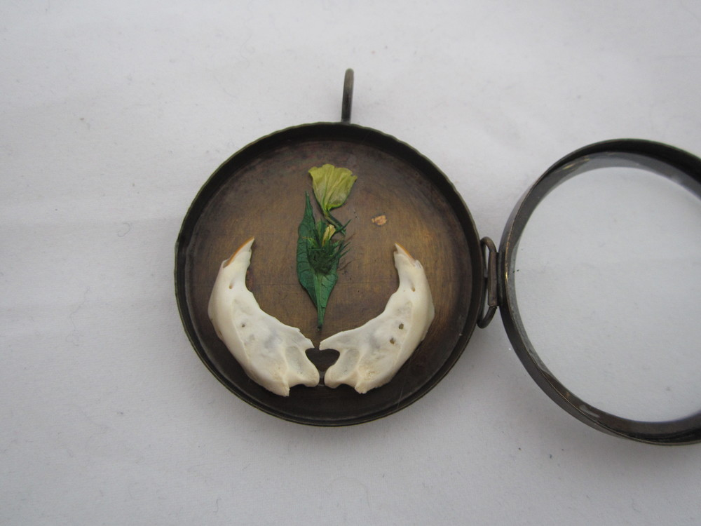 Rodent Jaw and Yellow Flowers Pendant 4.JPG