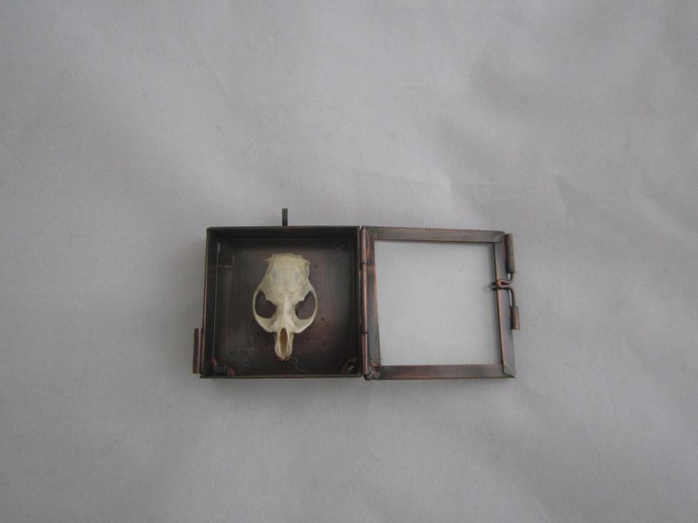Rodent Skull Shadowbox Pendant 8.JPG