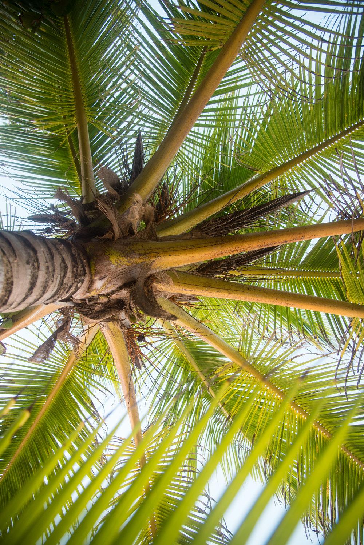 Barbados Kristen Rush Photography