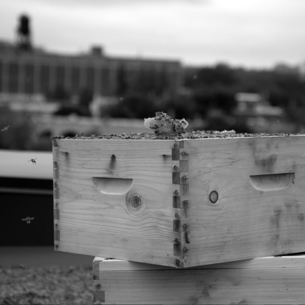 Nos abeilles ... qui rendent cette aventure possible!