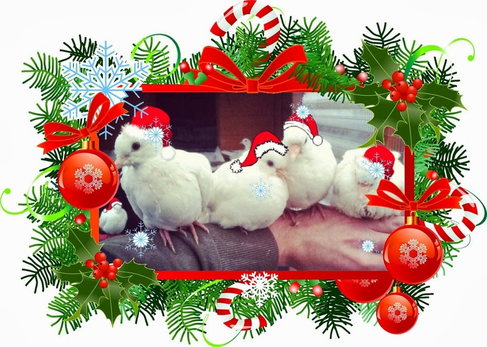 Festive greetings from my little stars!