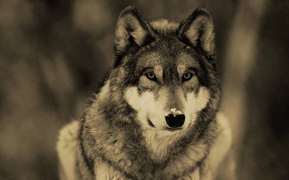 The strength of the pack is the wolf, and the strength of the wolf is the pack-RK