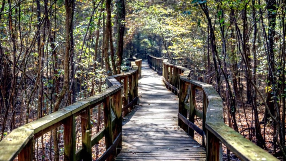 Mindfulness and Nature Hike-3.jpg