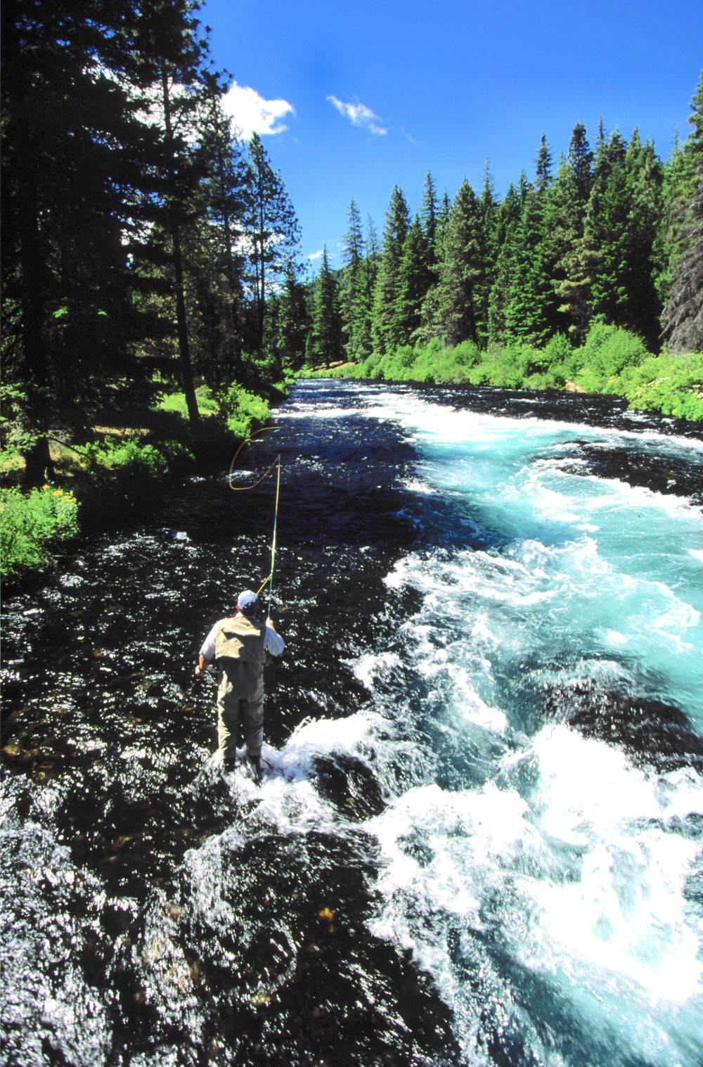 Fly fishing on the Metolius River in Eastern Oregon