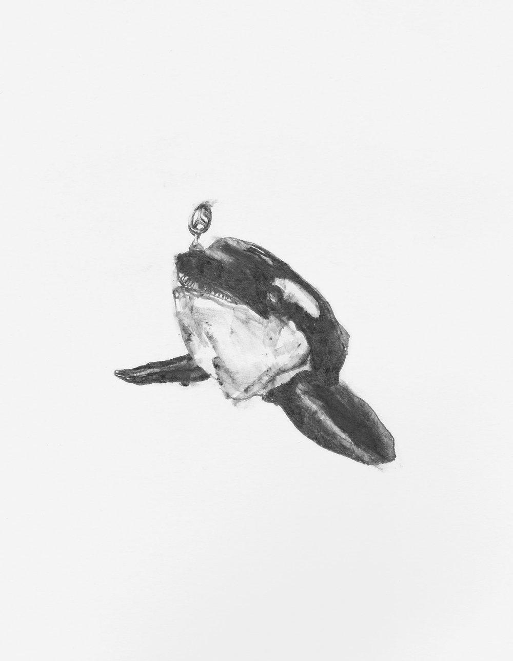Killers & Killer Whales pg 1