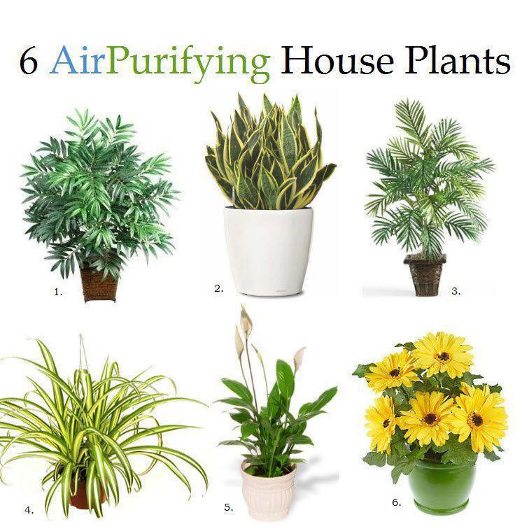 6AirPurifyingHousePlants1.jpg