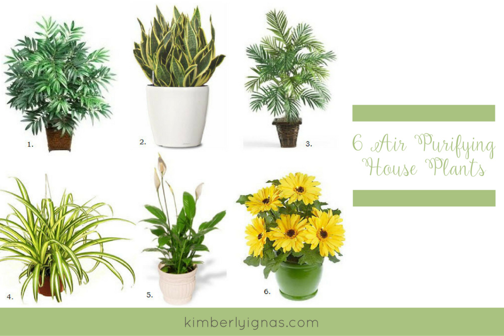 6 healthy house plants