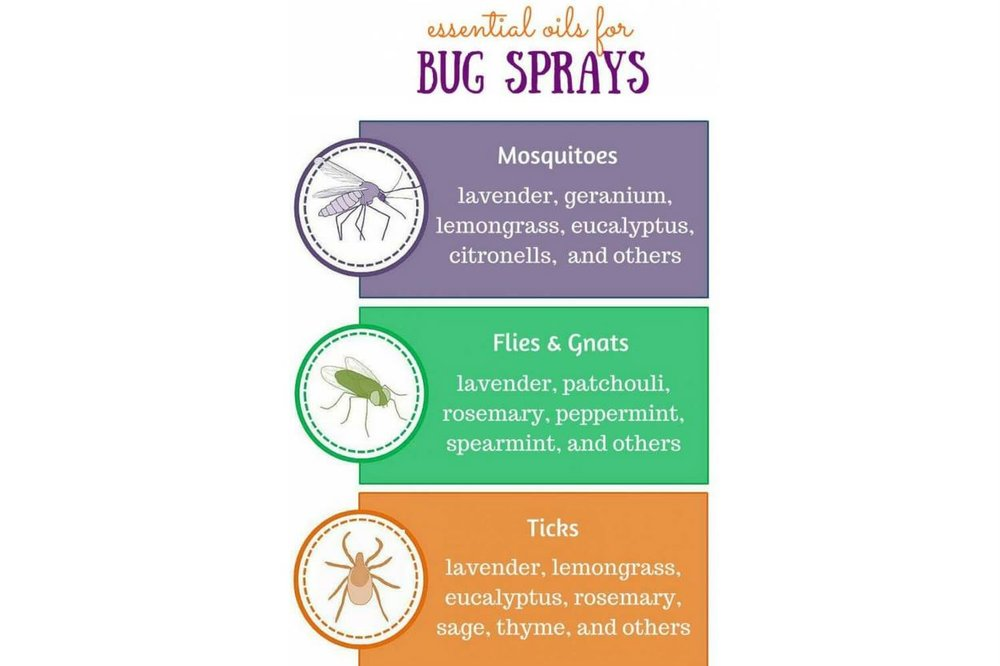 oils for bugs