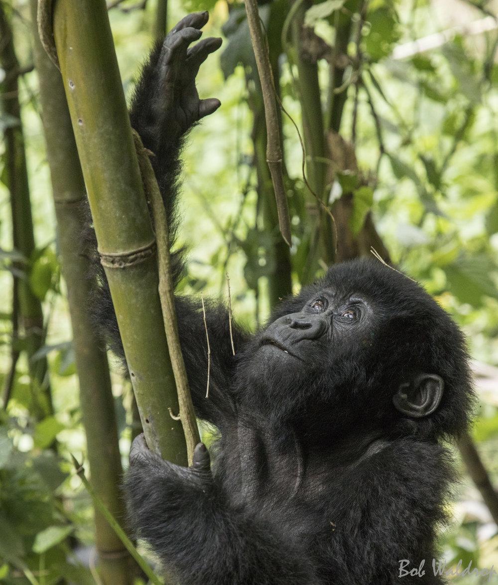 Rwanda-0334.JPG