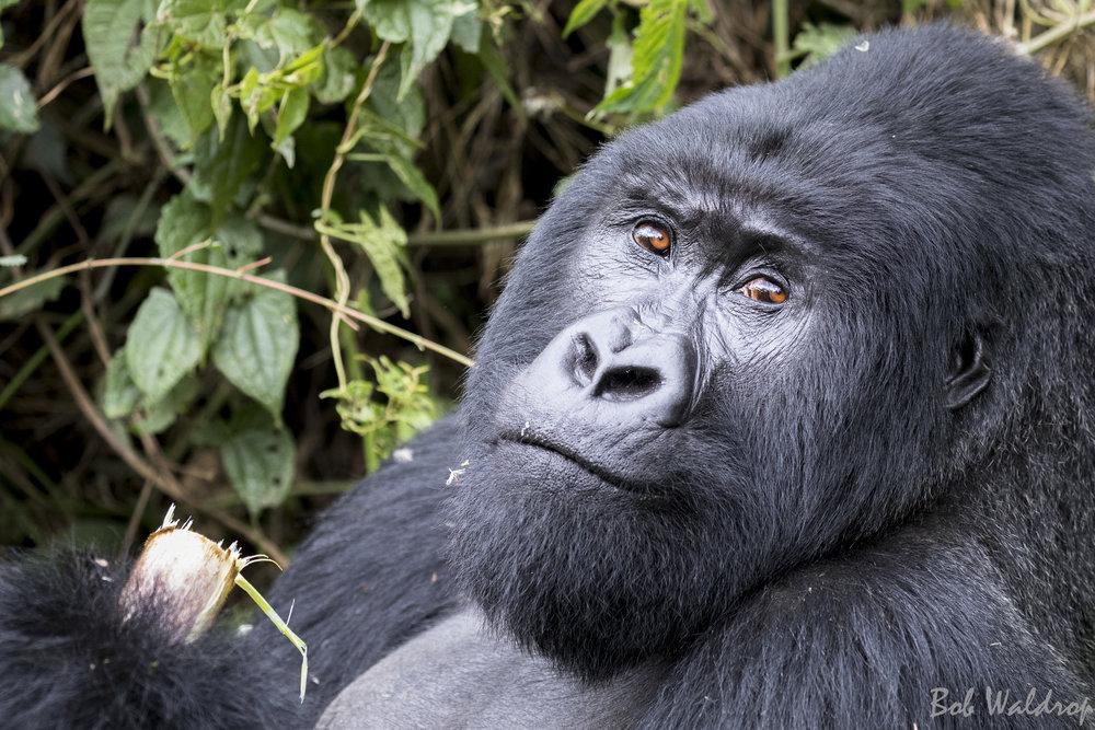 Rwanda-5570.JPG