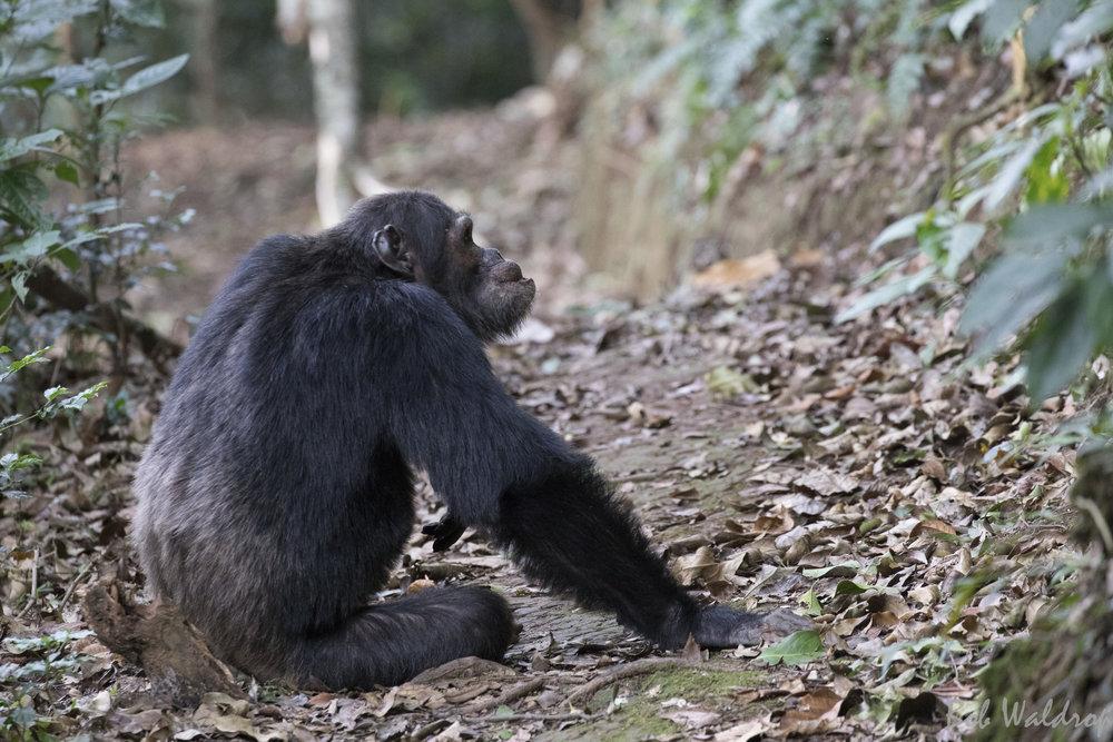 Rwanda-5029.JPG