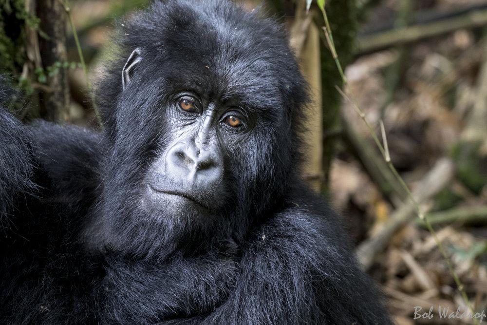 Rwanda-6087.JPG