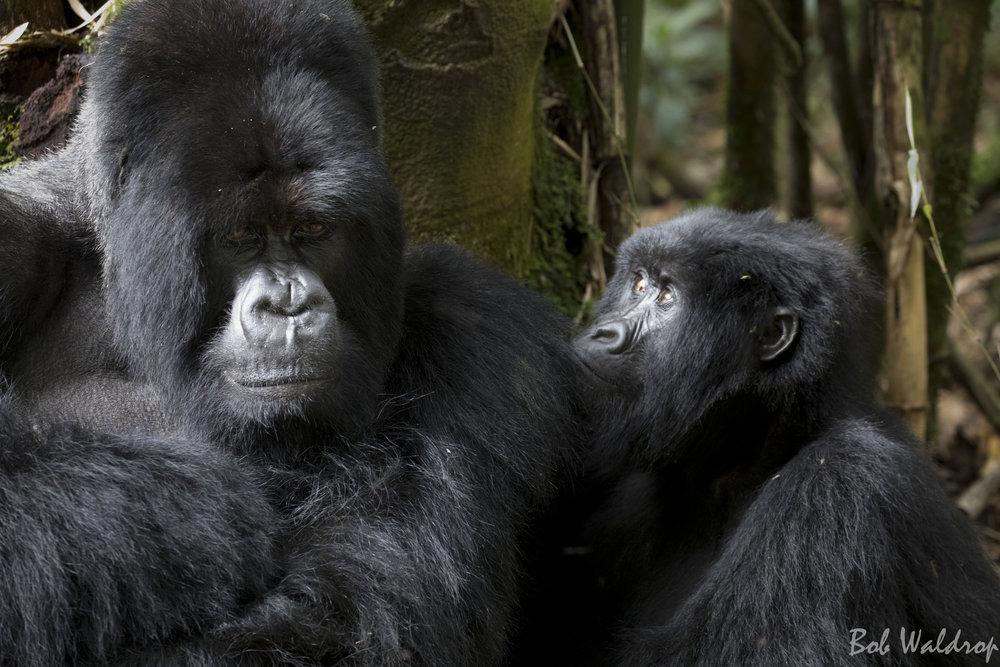 Rwanda-6104.JPG