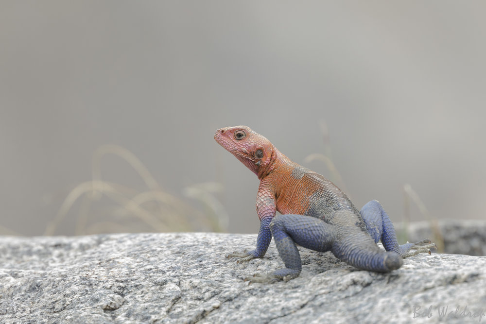 Serengeti-0019.JPG