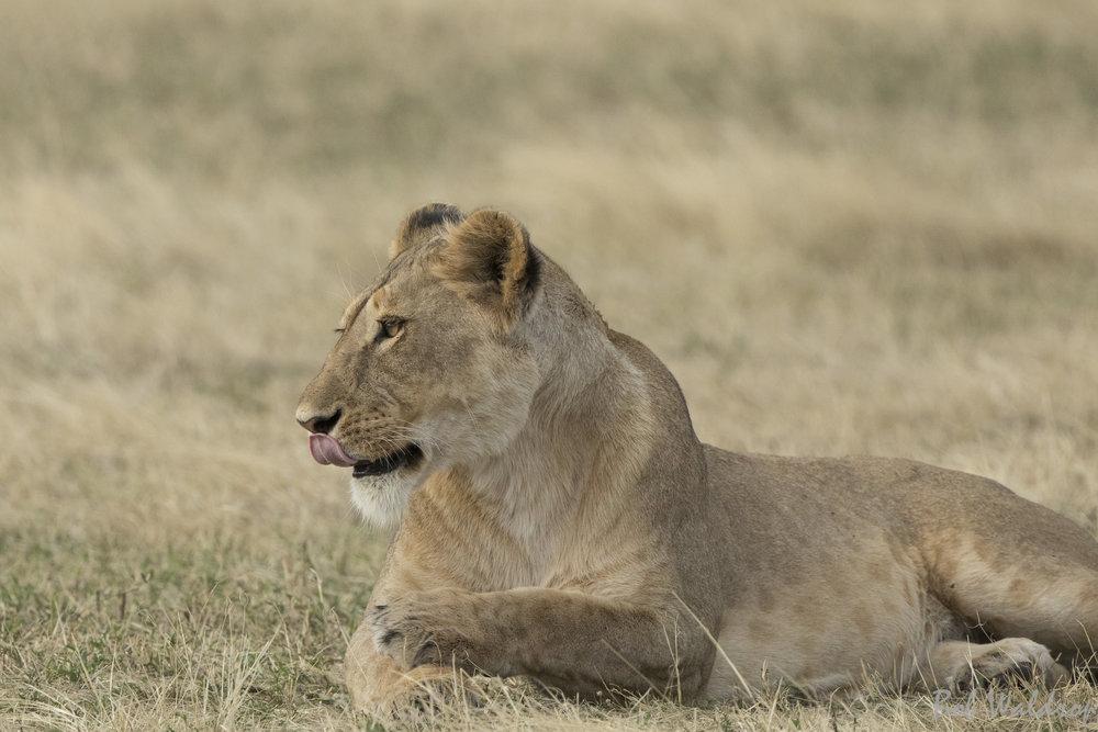 Serengeti-0917-2.JPG