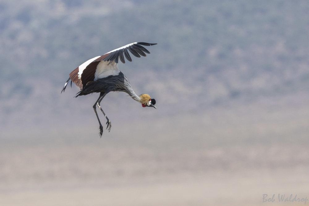 Serengeti-1504-2-2.JPG