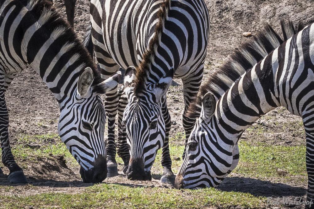 Serengeti-6882.JPG