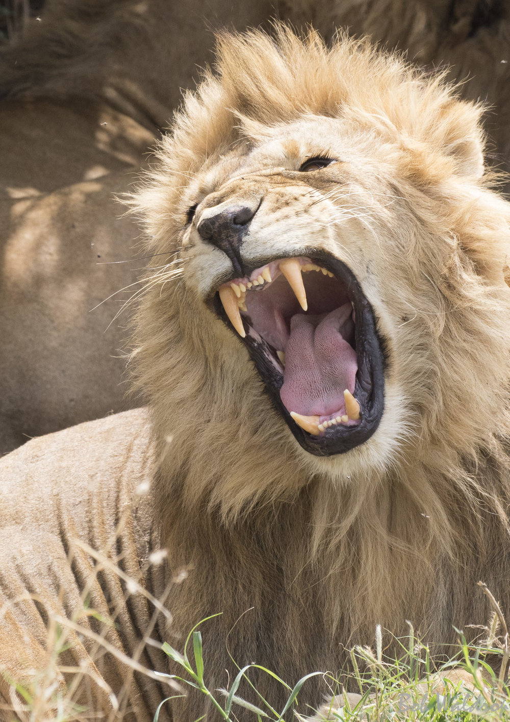 Serengeti-7828.JPG
