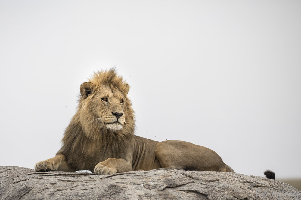 Serengeti-7870.JPG