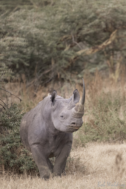 Serengeti-8146.JPG