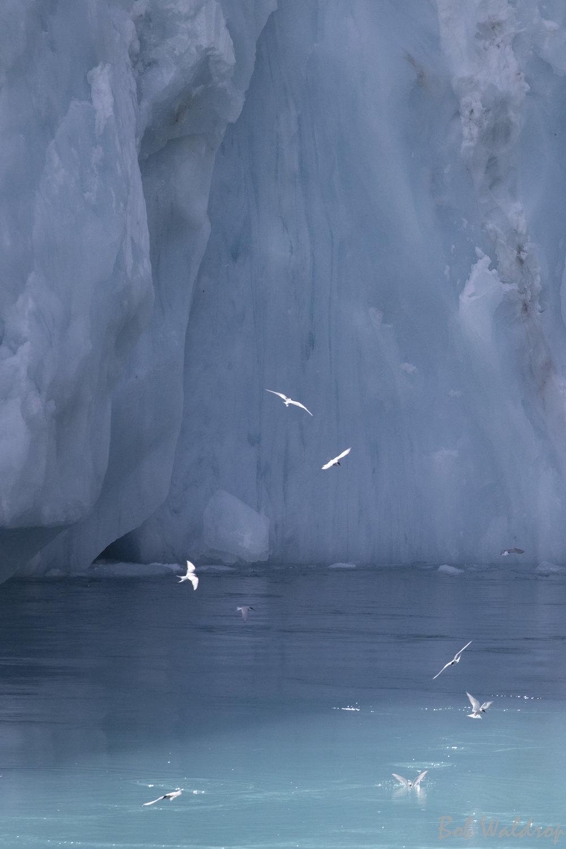Antarctica-3401.JPG