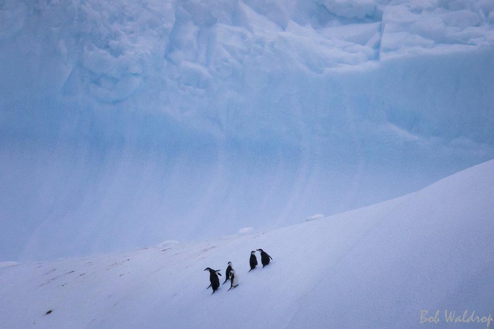 Antarctica-3878.JPG