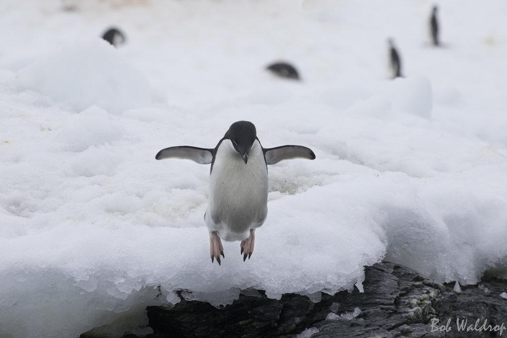 Antarctica-4067-Edit.JPG