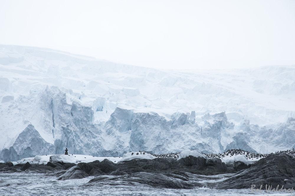 Antarctica-8811.JPG