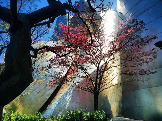 Suddenly it's spring again. @laphil . . . . .  #wanderlust #walkingadventures #explore #cityscape #localtourist #losangeles_city #losangeles #spring #travel #nofilter