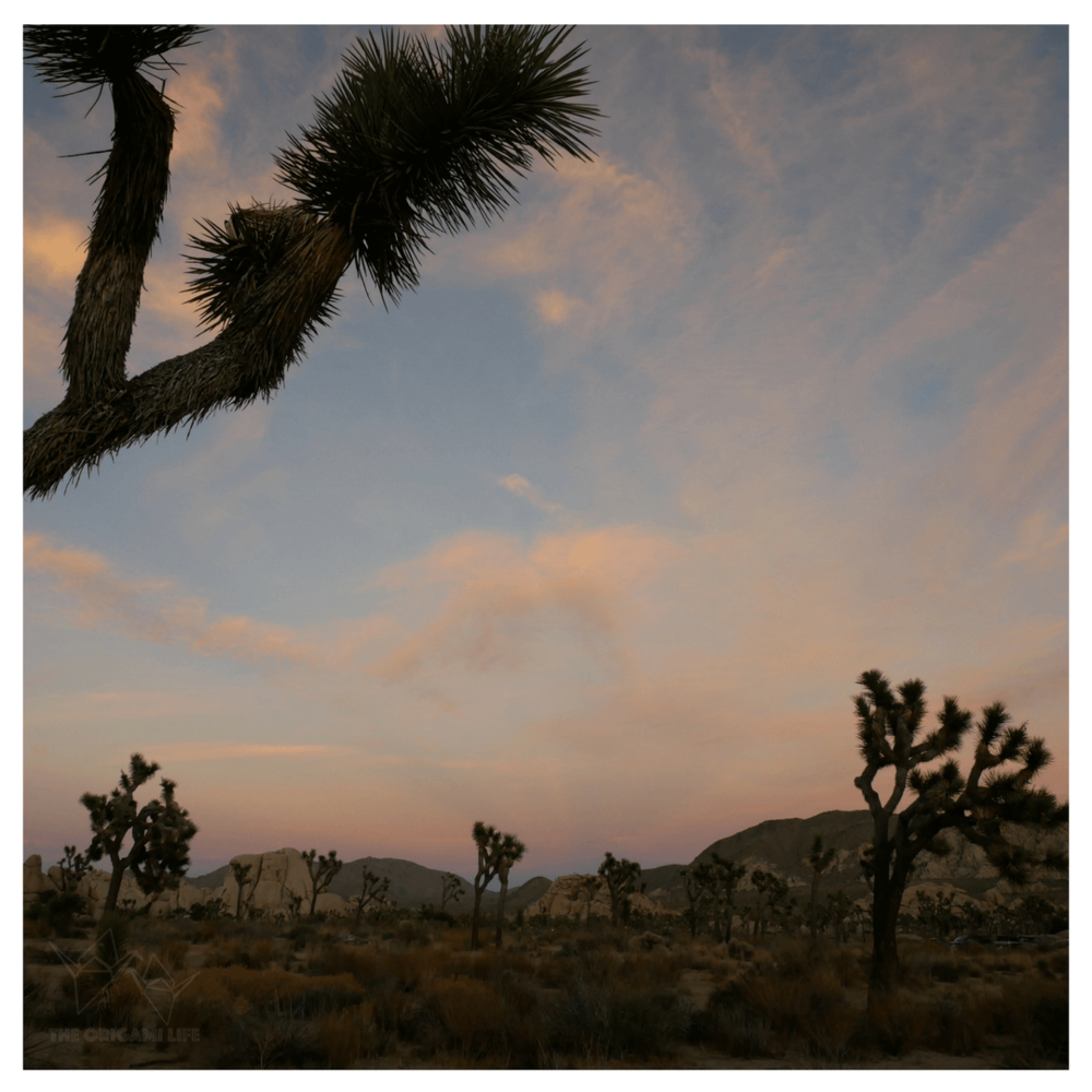 Sunset at Joshua Tree National Park. Keep an eye out for our upcoming guide and camping experience!