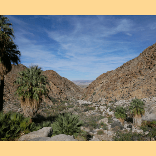 View from Forty-nine Palms Oasis