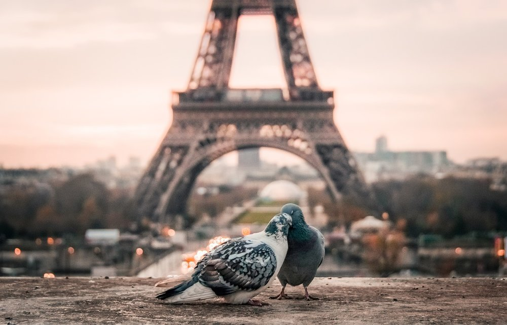 bird-2590901_1280.jpg