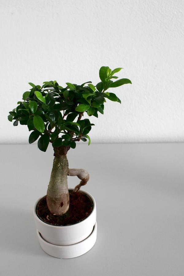leaf-3162427_1280.jpg