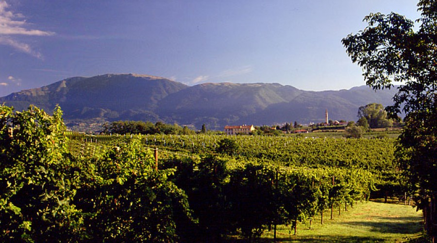 SPIRIT WINE IS OWNED AND OPERATED BY A FAMILY WHOSE HERITAGE TRACES BACK TO THE PROSECCO PRODUCING  MOUNTAIN VILLAGE OF CONEGLIANO, ITALY.