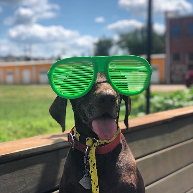 Pups are always welcome on our patio!  Hope you come back to see us @walterbrownpena, Thanks for the beautiful photo! Today we're out serving at Troutman & Sanders downtown until 1:30 Later today we'll be at @hardywood Food Truck Court from 5:30-9:00