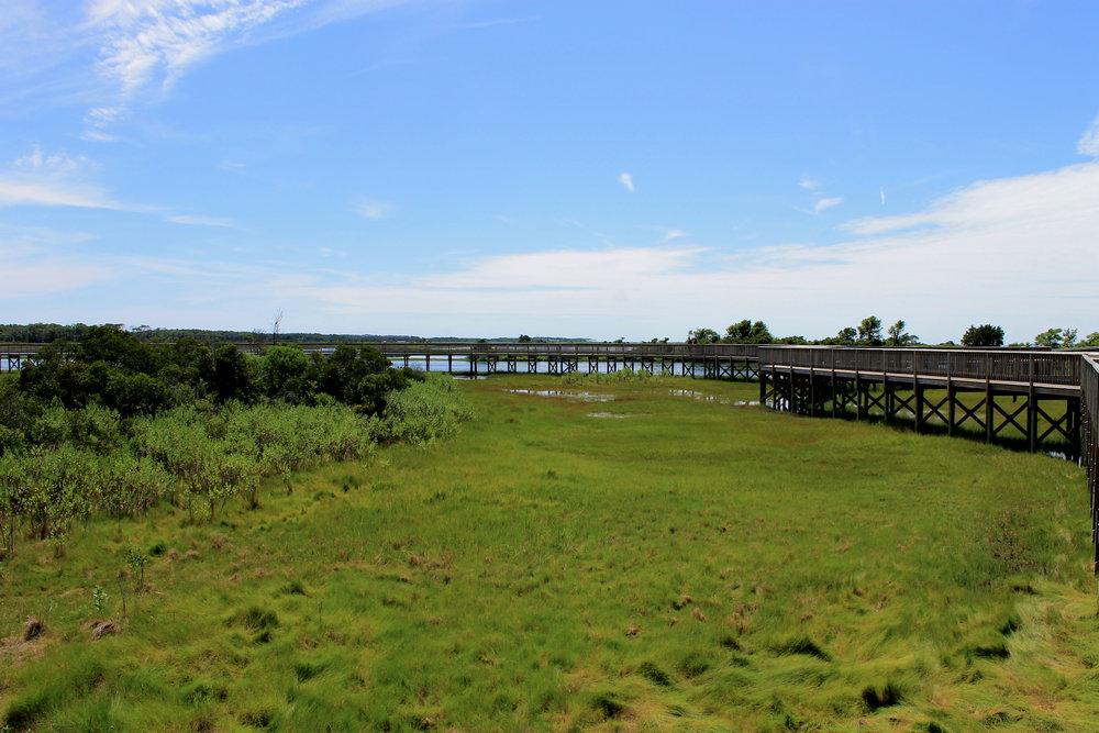 Marsh hike at Assateague Island