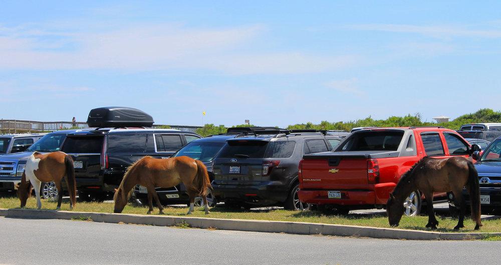 """""""Wild"""" horses"""