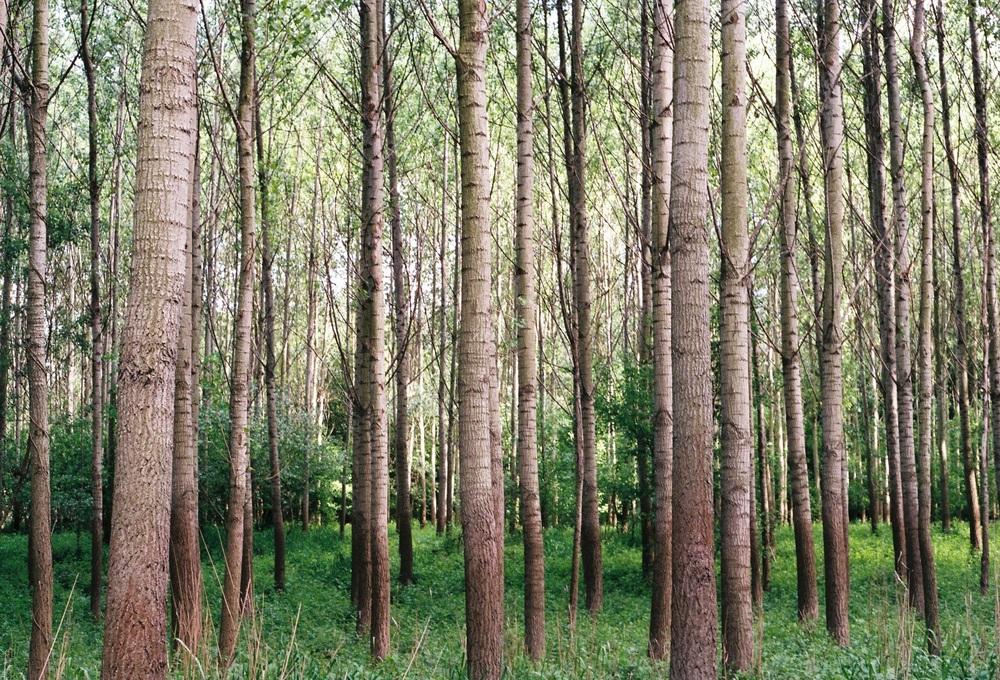 woods-1209274.jpg