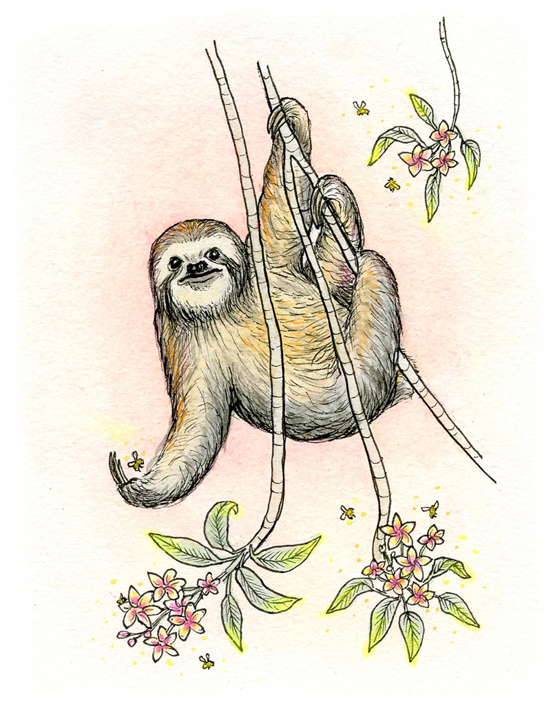 Web Sloth Valentine