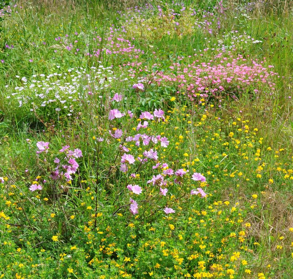 Meadow Flowers.jpg
