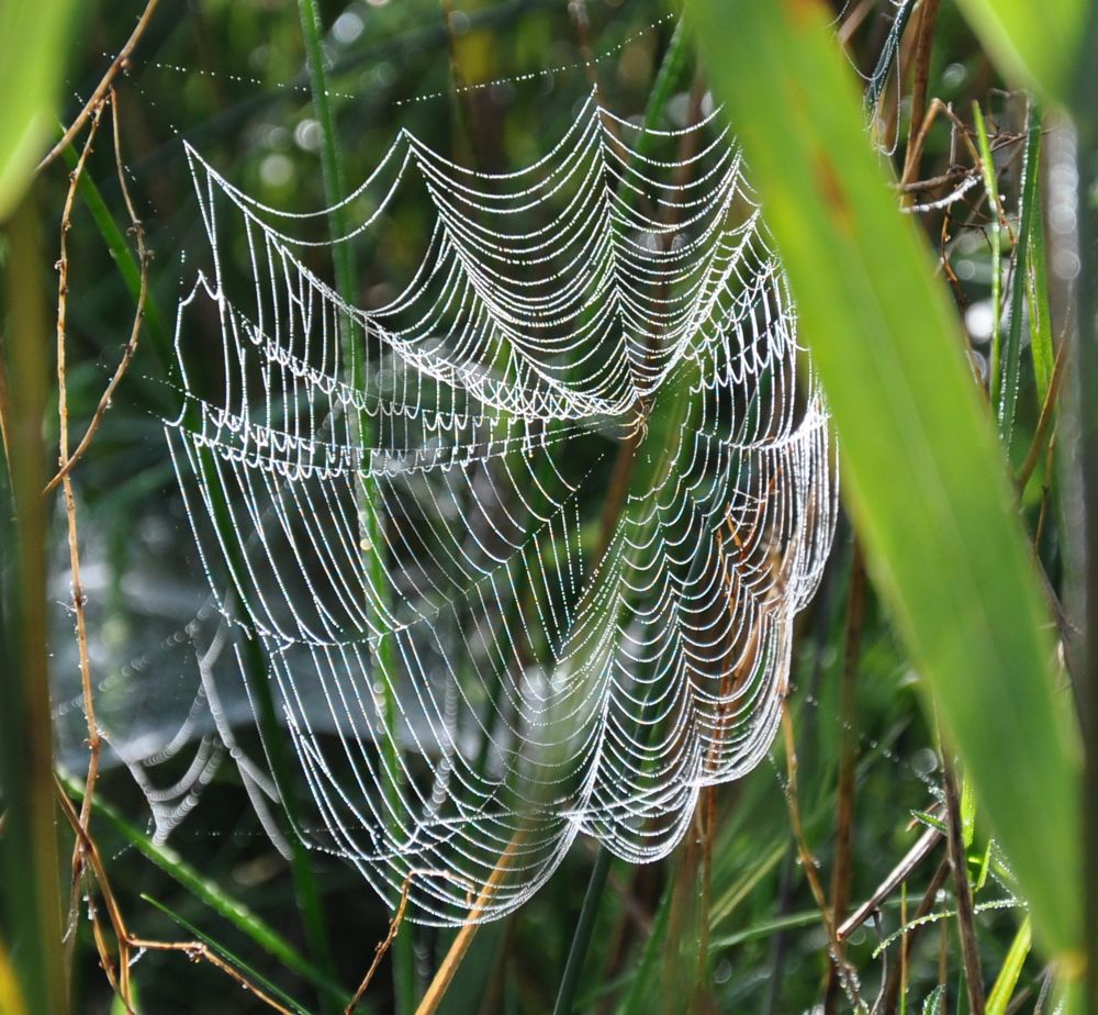 Orb Web with Spider.jpg