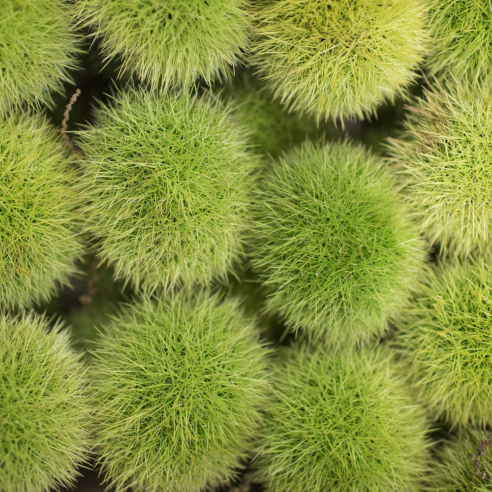 European-Salad-Company-chestnuts.jpg