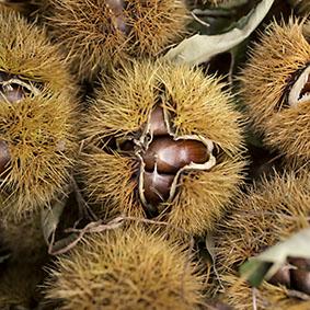chestnuts-european-salad-company.jpg