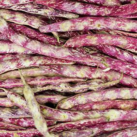 borlotti-beans-european-salad-company.jpg