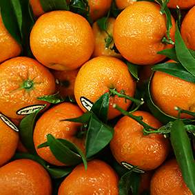 clementines-european-salad-company.jpg